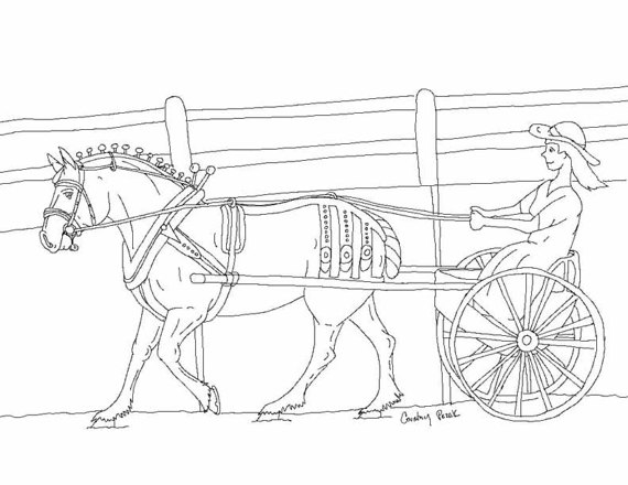 570x440 Items Similar To Single Women Carriage Driving Horse Pony Draft