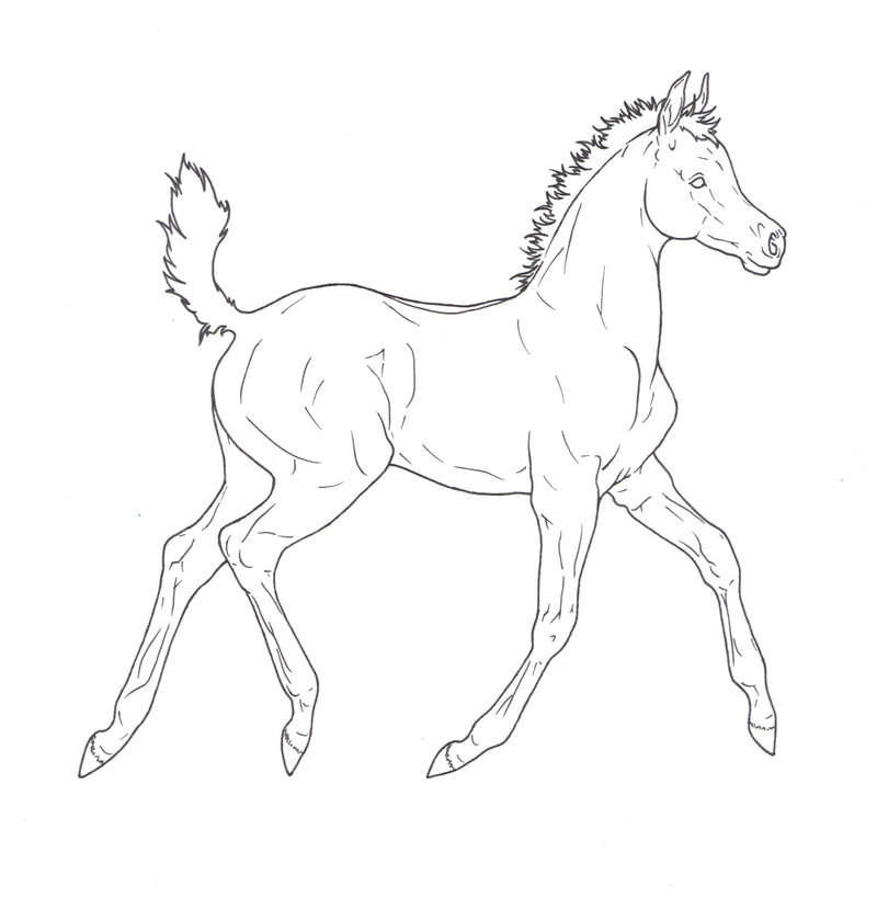 Horse And Foal Drawing