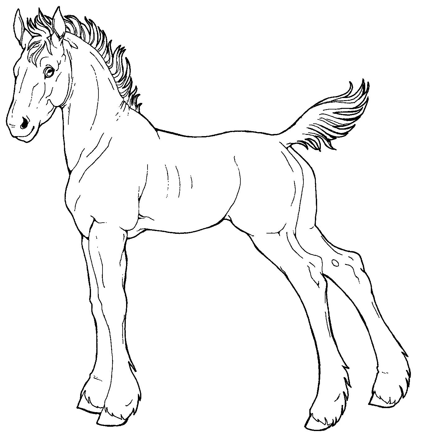 1362x1406 Free Line Art Draft Foal By Applehunter