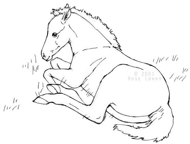 648x492 Horse Drawings