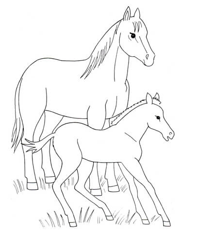 406x480 Horse And Foal Coloring Page Free Printable Coloring Pages