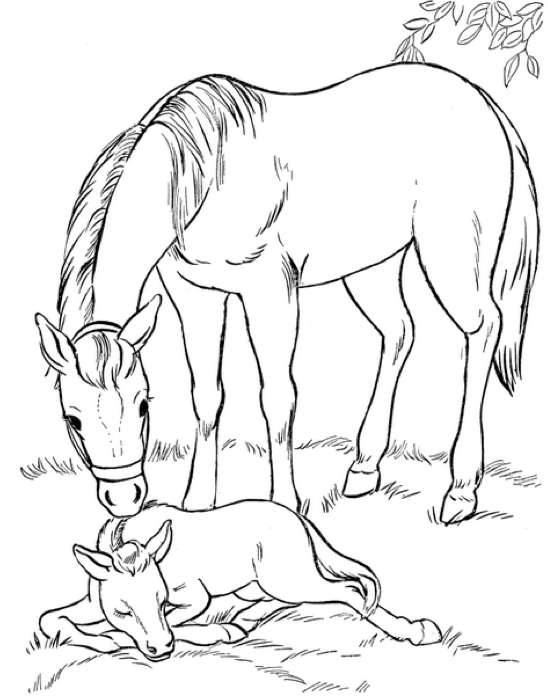 548x698 Mare And Foal Coloring Page Amp Coloring Book