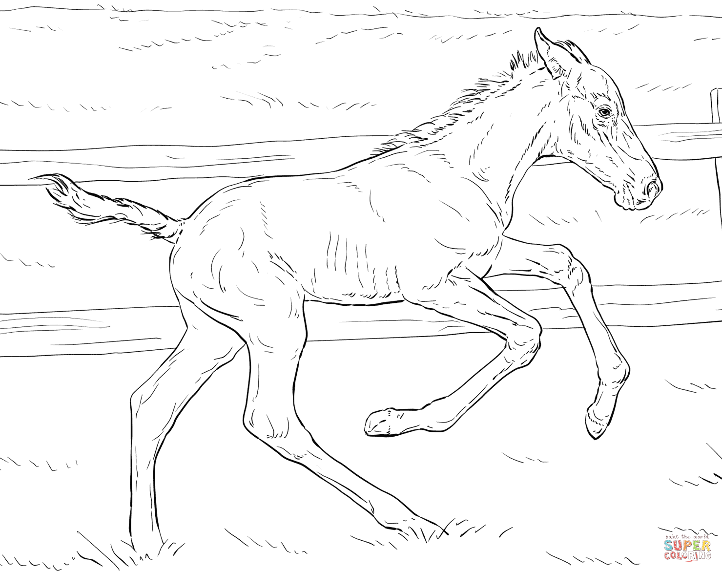 1479x1171 Bucking Foal Coloring Page Free Printable Pages