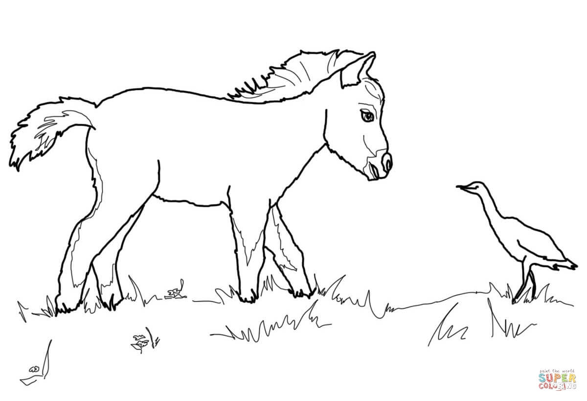 The Best Free Foal Drawing Images Download From 50 Free Drawings Of
