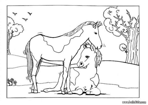 620x439 Foal And Mare Coloring Pages