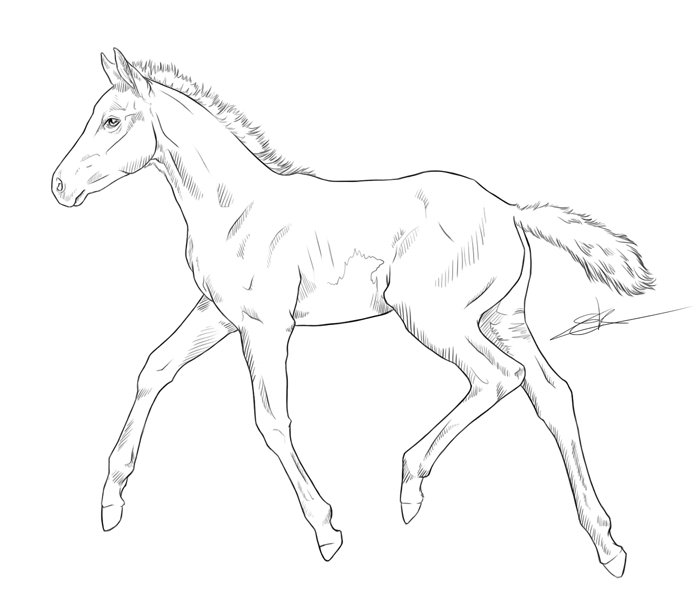 700x600 Foal By On @ Horse Line Art