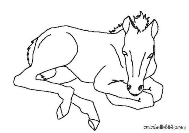 620x438 Foal Coloring Pages