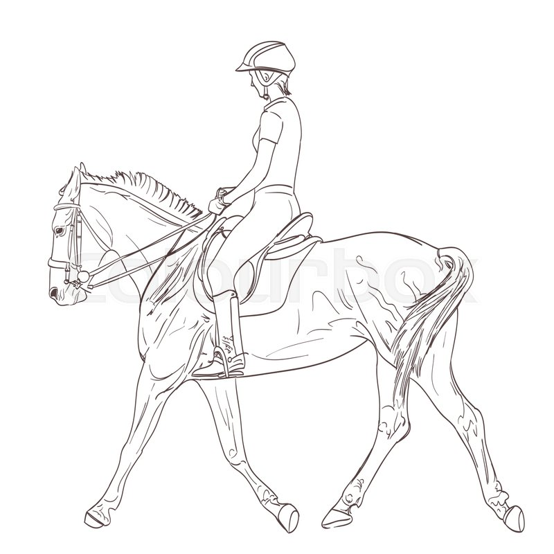 800x800 A Horse Rider Drawing. Equestrian Training Line Art Illustration