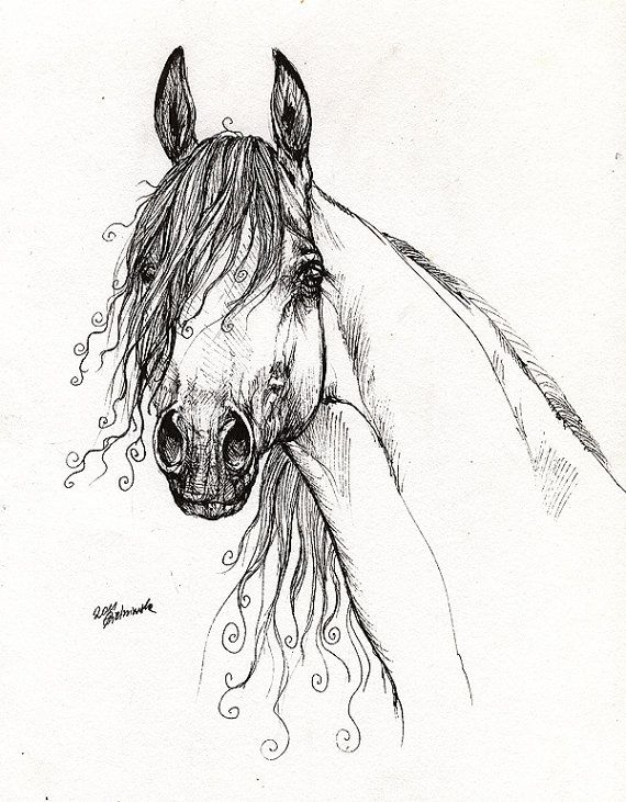 Horse Art Drawing