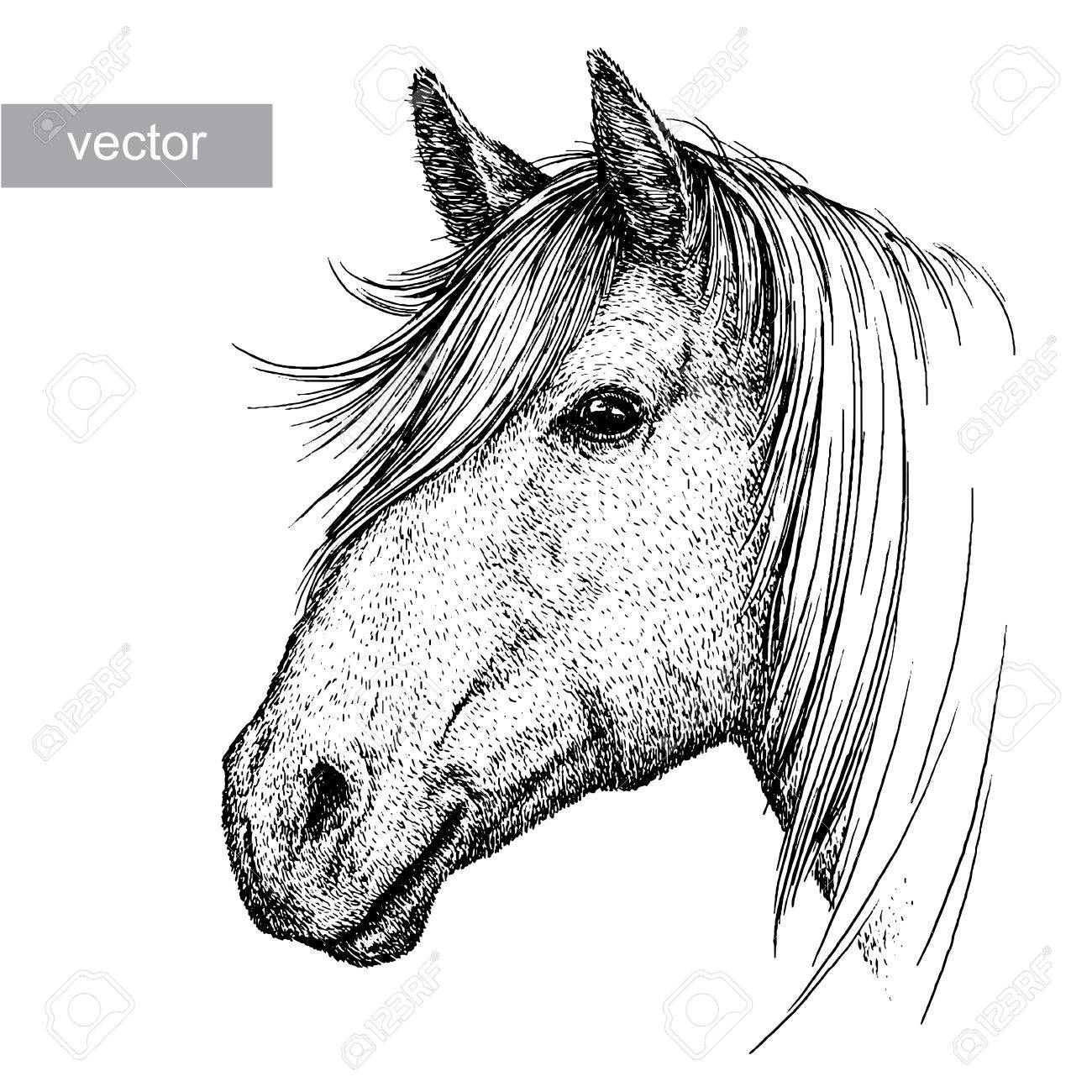 1300x1300 Engrave Isolated Horse Vector Illustration Sketch. Linear Art