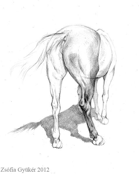 477x600 Horse Rear Leg Study 2 By Zsofiagyuker