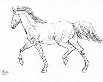 340x270 Photos Pics Of Drawings Of Horses,