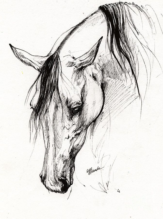 672x900 Pictures Ink Sketches Of Horses,