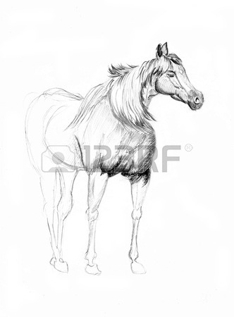 332x450 A Horse Sketch On Paper Stock Photo, Picture And Royalty Free