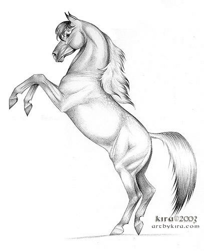 407x500 Drawings Of Horses