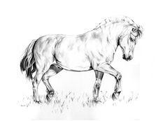 236x173 Images Pencil Drawings Of Horses Horse Drawings Pencil