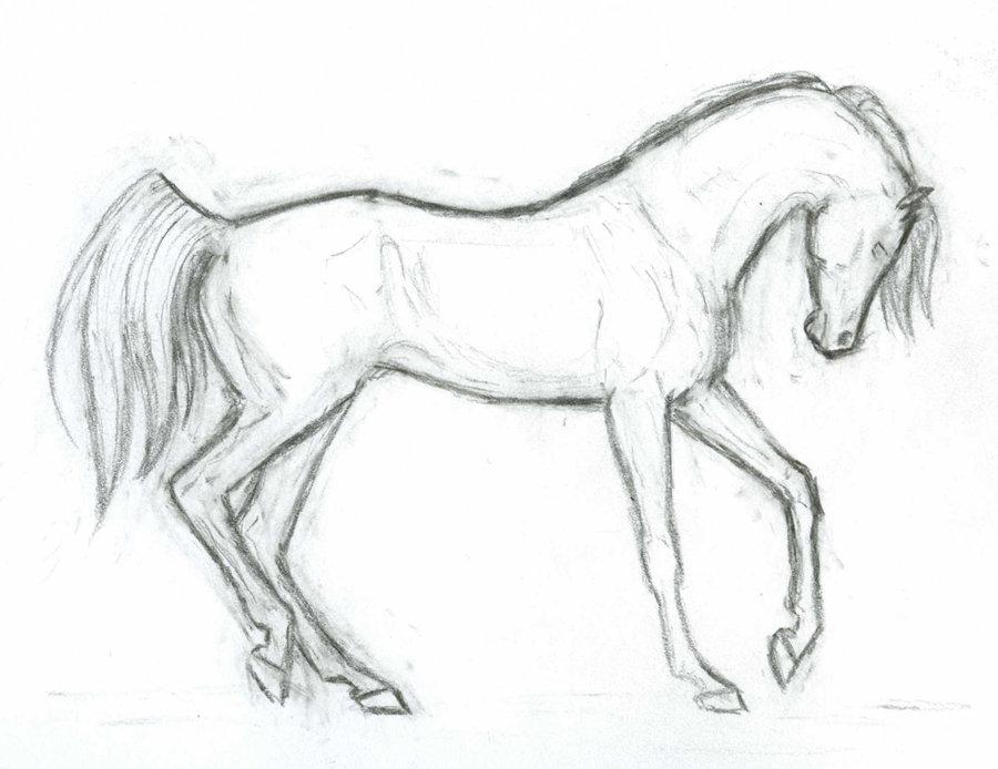 900x694 Arabian Horse Lineart By Akuinnen24