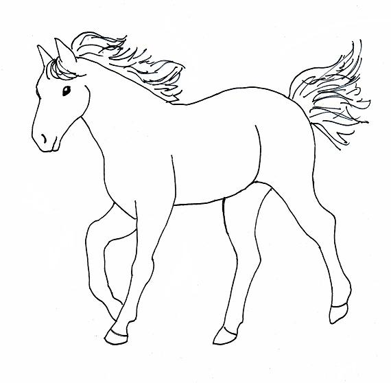 570x558 Horse Drawing Step By Step