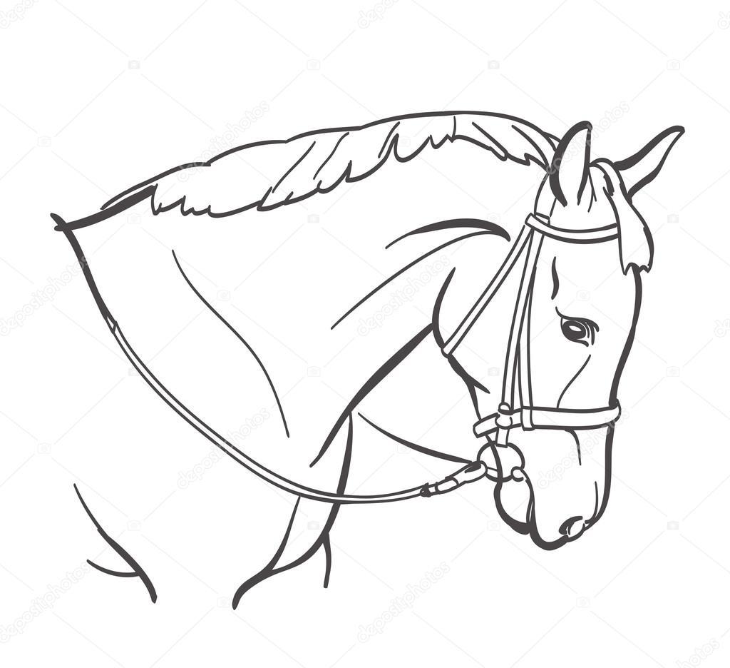 1024x936 Horse Head Line Art Drawing. Equestrian Training Theme Stock