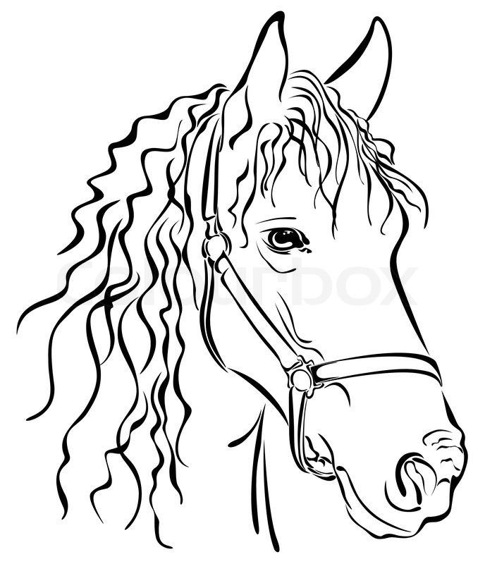 688x800 Closeup Sketch Of Horse Head Black Stock Vector Colourbox