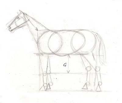 400x338 Drawing Lesson For Beginner Artists The Proportions Of A Horse