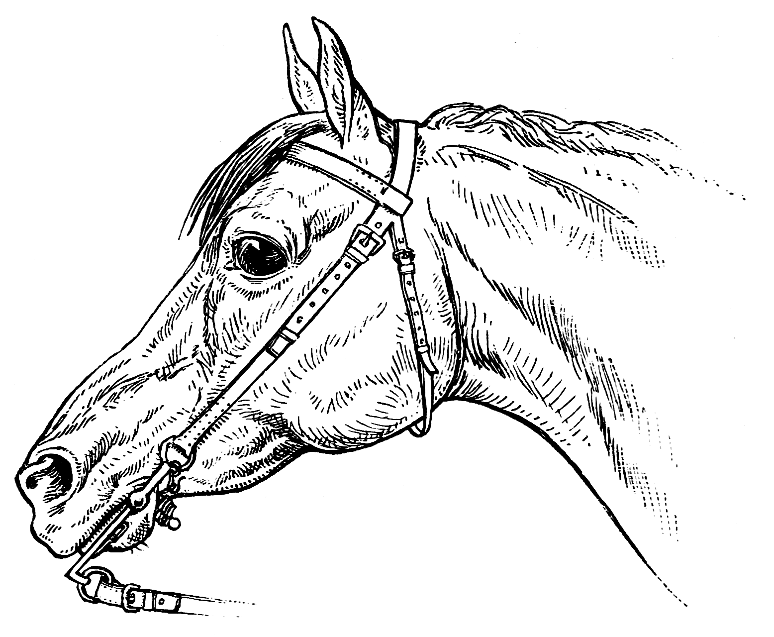 1556x1280 Coloring Pages Horsemanship For Women The Equinest