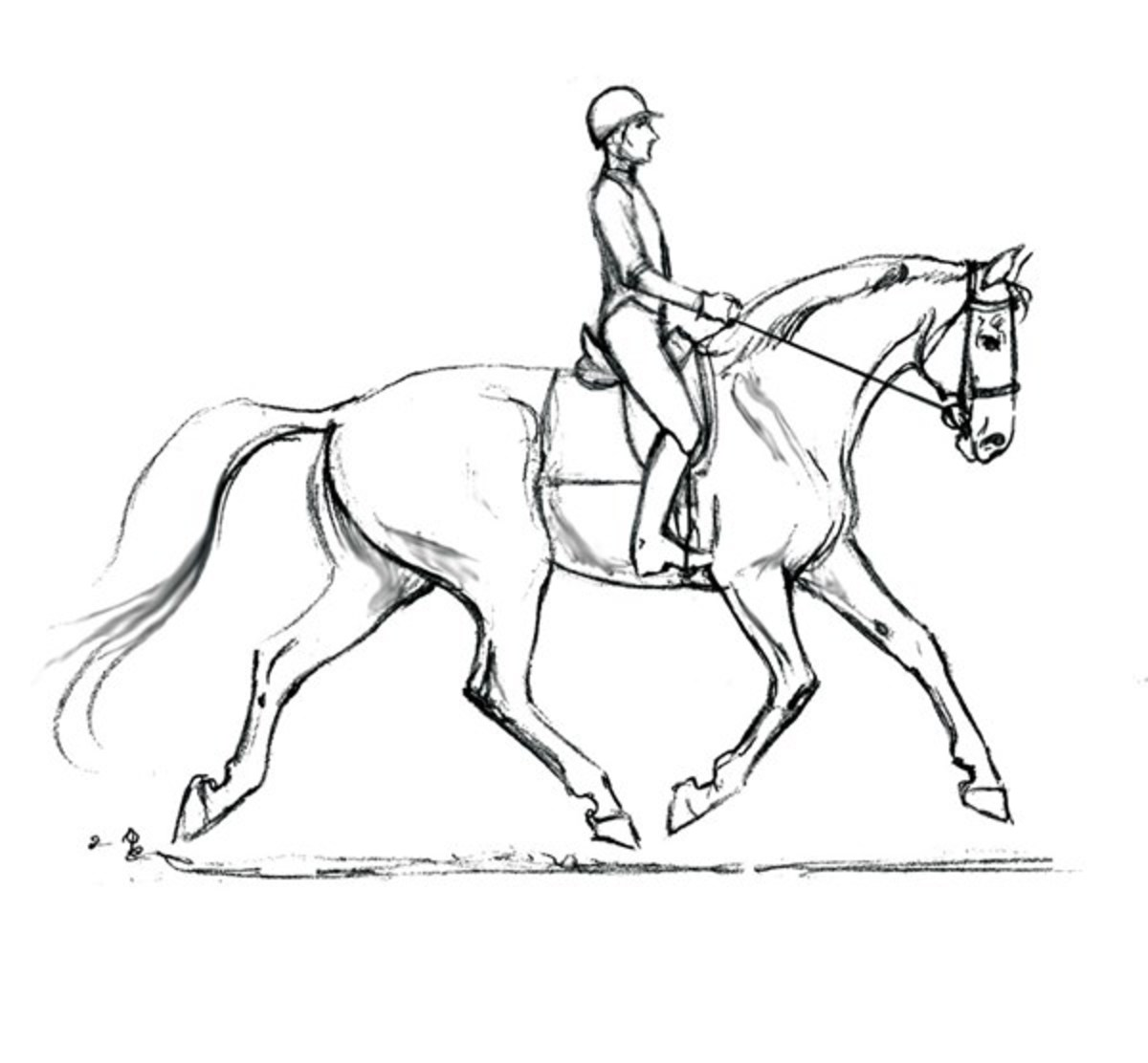 1200x1112 Optimizing Your Dressage Horse's Soundness From The Saddle