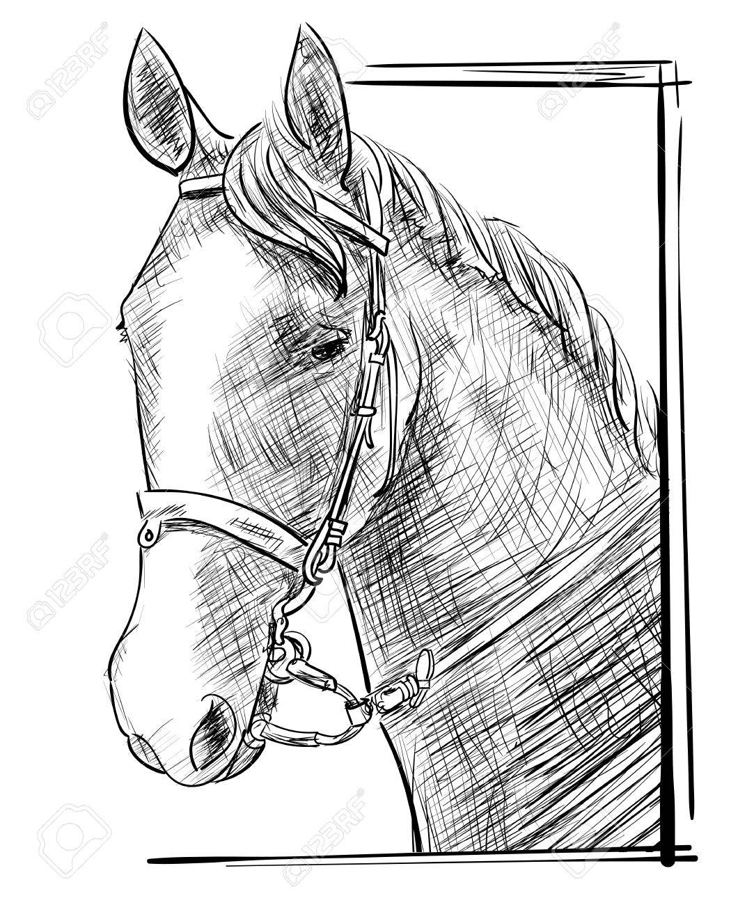 1083x1300 Vector Engraving Sketch Of Hand Drawn Horse Head In Harness
