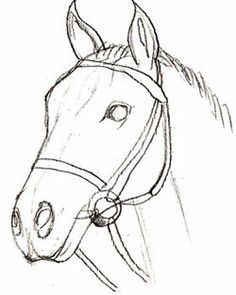 236x295 How To Draw A Realistic Horse Head How To Draw A Horse Head