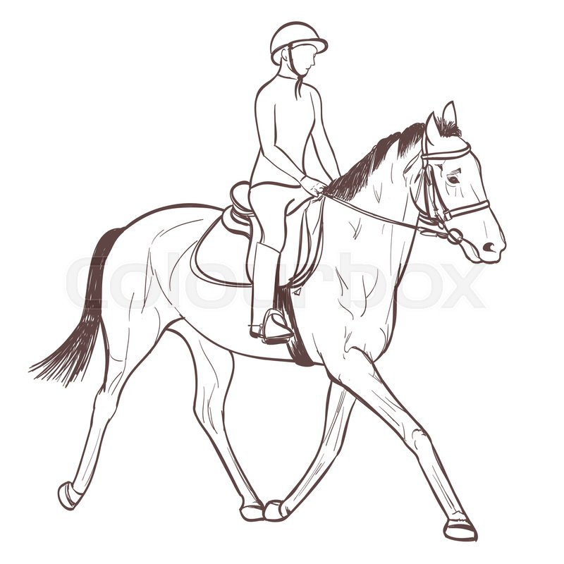 800x800 A Horse Rider Drawing. Equestrian Sport Training Line Art Vector
