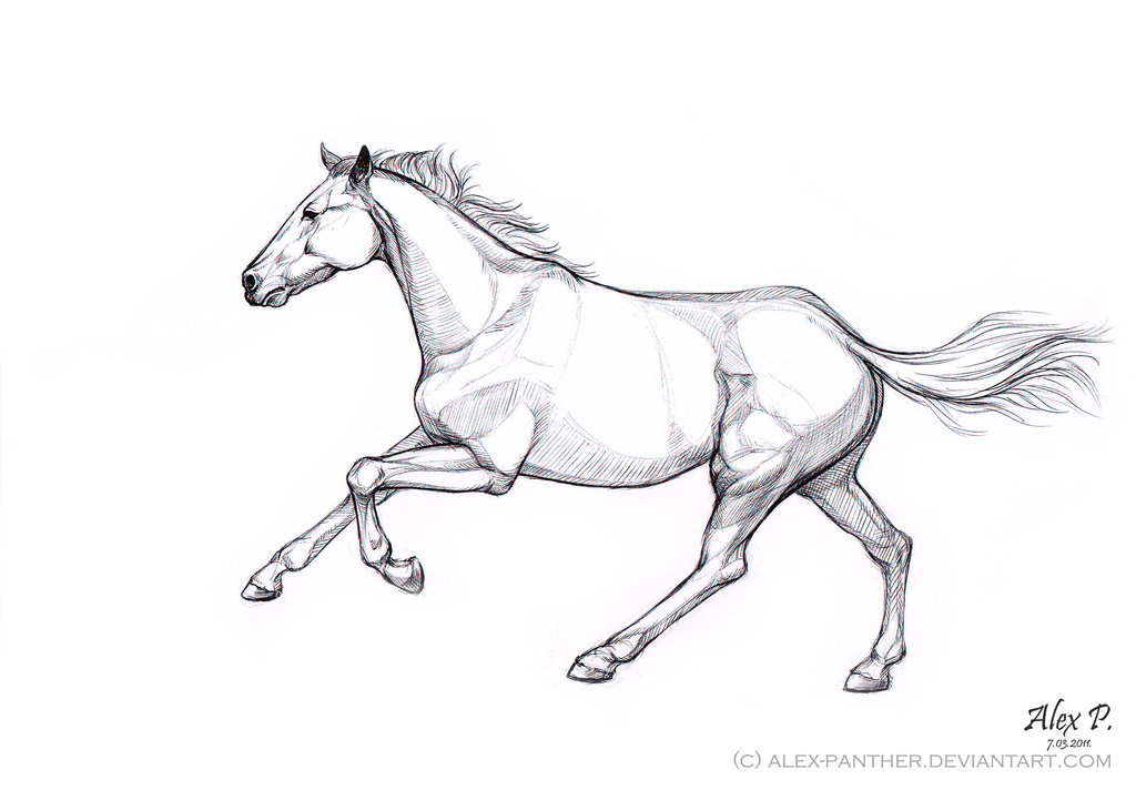 1024x712 A Sketch Of Galloping Horse By Alex Panther
