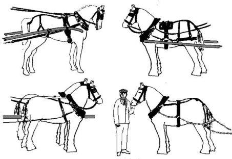 Horse Cart Drawing At Getdrawings Com