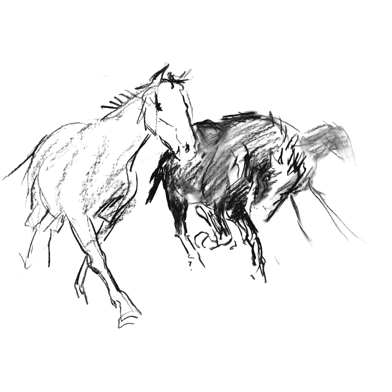 800x800 Diana Hand Evokes The Spirit Of The Horse In Her Drawings.
