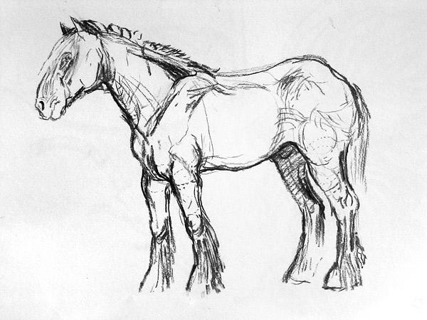 600x450 Drawing Sadie Brockbank Mrbs