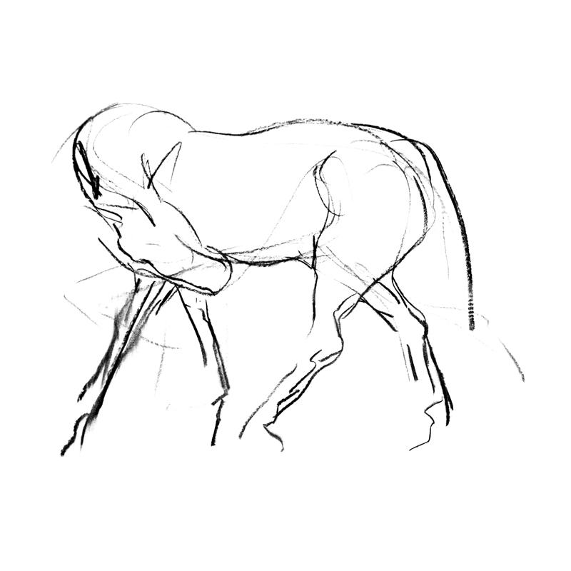 800x800 Expressive Equestrian Art By Scottish Artist Diana Hand