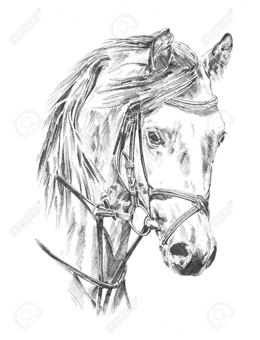 994x1300 Freehand Horse Head Pencil Drawing Stock Photo, Picture