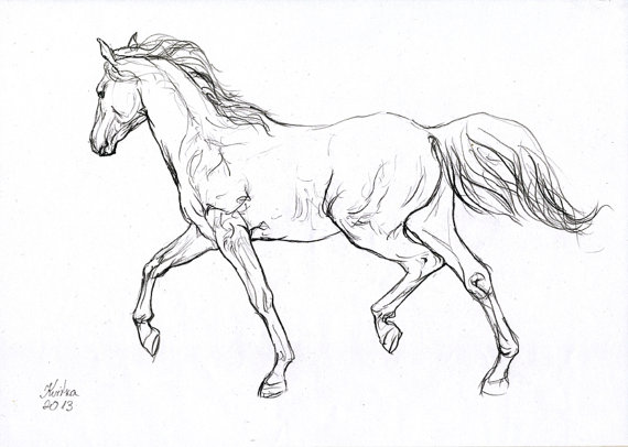 570x406 Horse drawing original Animal drawing White Grey Paper A4 sketch