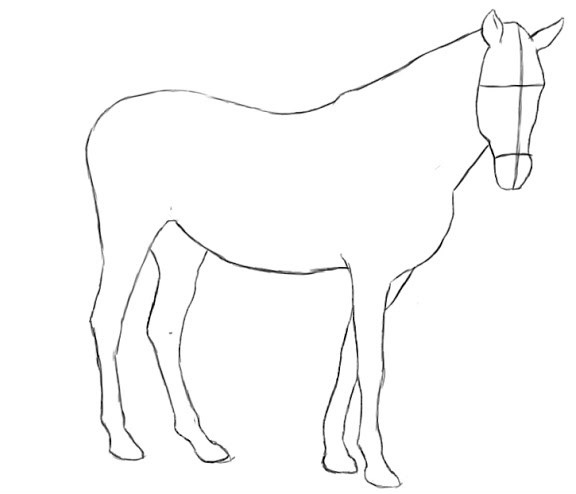576x494 How To Draw A Horse