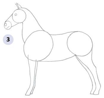 350x330 How to Draw a Horse
