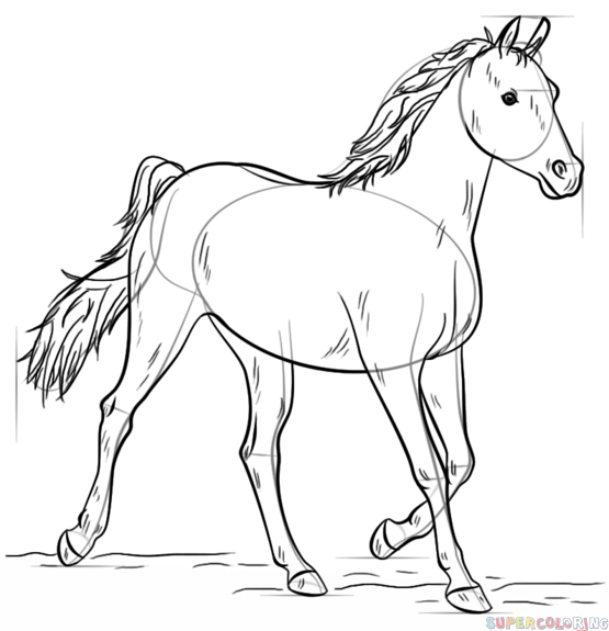 555x575 How to draw an Arabian horse Step by step Drawing tutorials