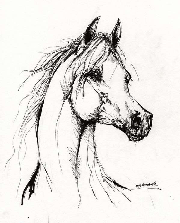 599x742 Arabian Horse Drawing 38 Art Print by Angel Ciesniarska