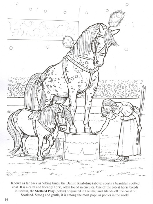 528x700 Favorite Horses Realistic Horse Coloring Book For Kids