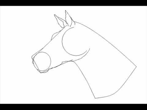 480x360 How To Draw A Horse The Easy Way ! !!!!old!!!!