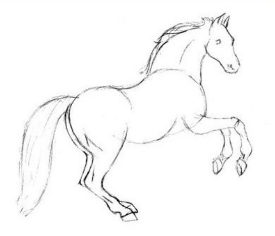 545x468 Easy sketches of animals Step 1 Drawing A Horse In Pencil
