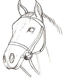 250x313 How To Draw A Horse Head, Step 5 Getting Creative And Crafty
