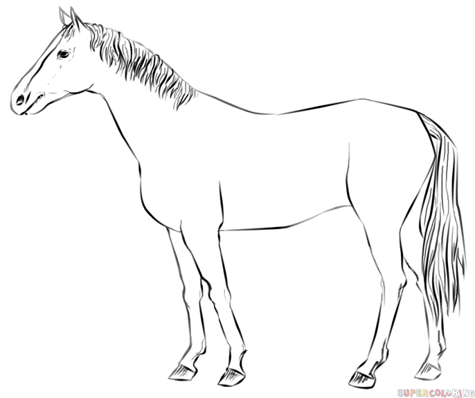 686x575 How To Draw A Realistic Horse Standing Step By Step. Drawing