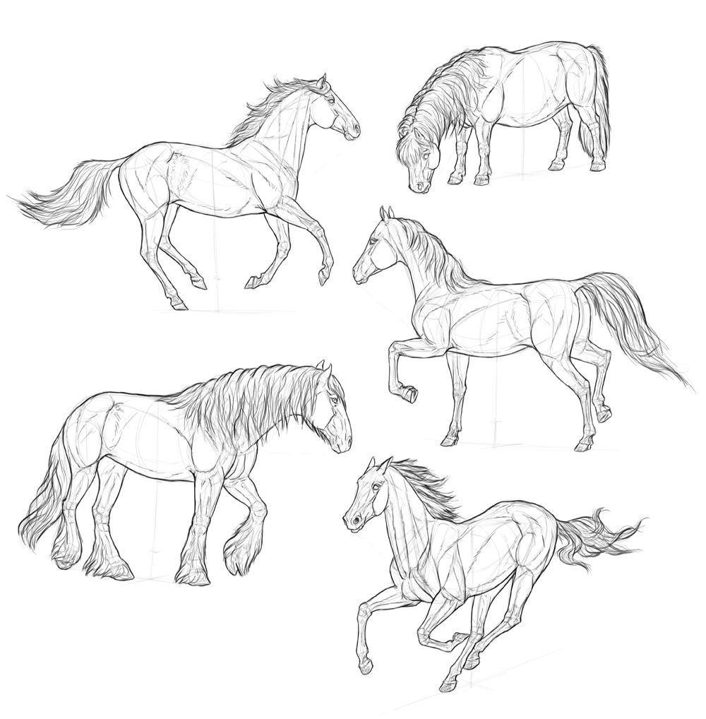 1000x1018 Drawing Of A Horse How To Draw A Horse In Easy Steps For Children