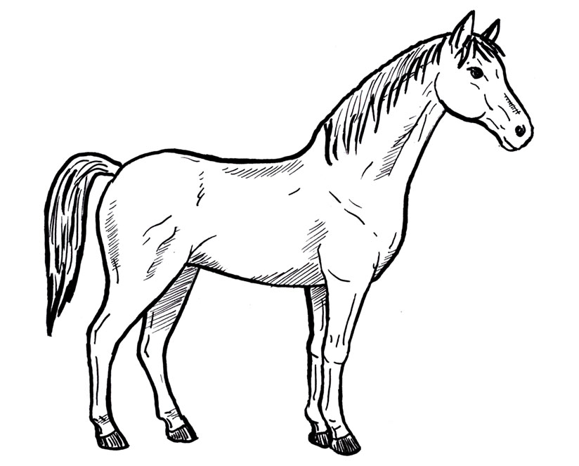 Horse Drawing For Kids at GetDrawingscom Free for personal use