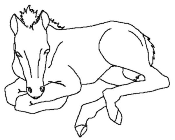 600x480 New Born Baby Horse Animal Coloring Pages For Kids