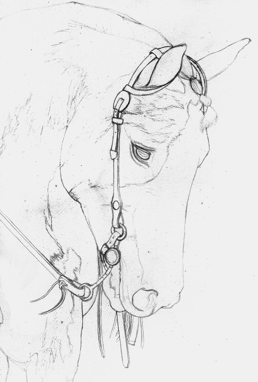 900x1335 American Paint Horse Sketch By Yankeestyle94